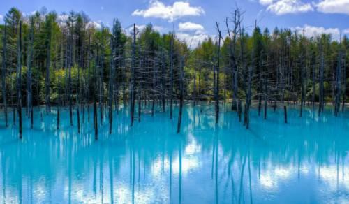 Hồ Biei ở Nhật Bản. Ảnh: Raredelights.