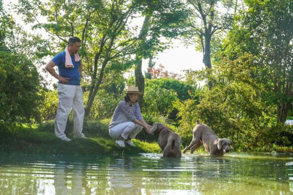 Chị Zhang đã thuê khu đất này trong thời gian 50 năm. Năm 2011, Monet Garden được một tạp chí Mỹ bình chọn là khu vườn đẹp nhất Trung Quốc thuộc quyền sở hữu cá nhân.