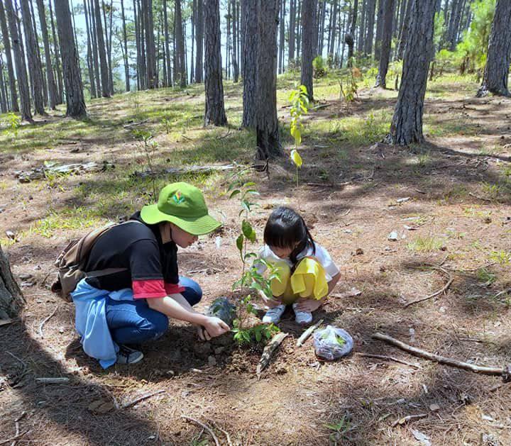 Cùng trẻ trồng Mai anh đào