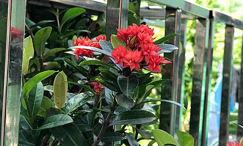 Nhà mới tuy nhỏ nhưng chị Dương vẫn trồng được hoa ở ban công. Ảnh: H.A