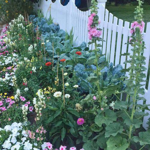 Cuộc sống vô cùng yên bình của cặp vợ chồng cùng 4 con trai bên khu vườn đầy hoa và rau - Ảnh 11.