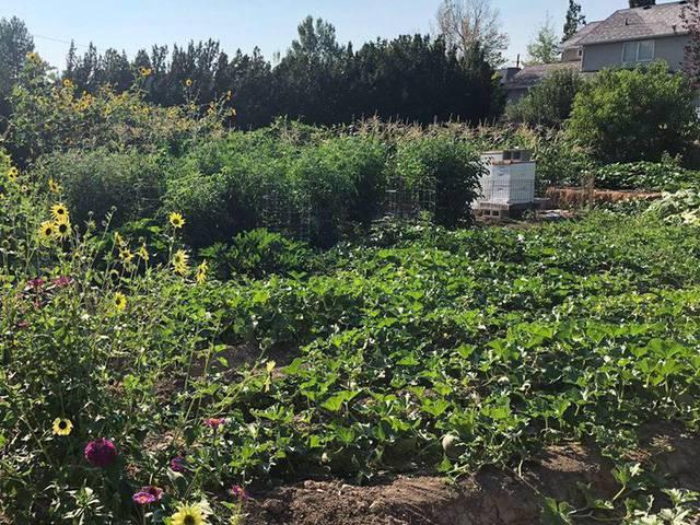 Cuộc sống vô cùng yên bình của cặp vợ chồng cùng 4 con trai bên khu vườn đầy hoa và rau - Ảnh 13.