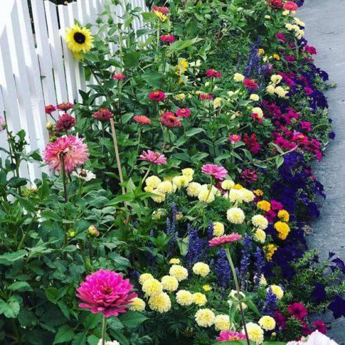 Cuộc sống vô cùng yên bình của cặp vợ chồng cùng 4 con trai bên khu vườn đầy hoa và rau - Ảnh 3.