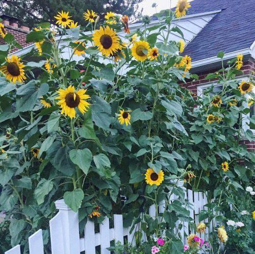 Cuộc sống vô cùng yên bình của cặp vợ chồng cùng 4 con trai bên khu vườn đầy hoa và rau - Ảnh 4.