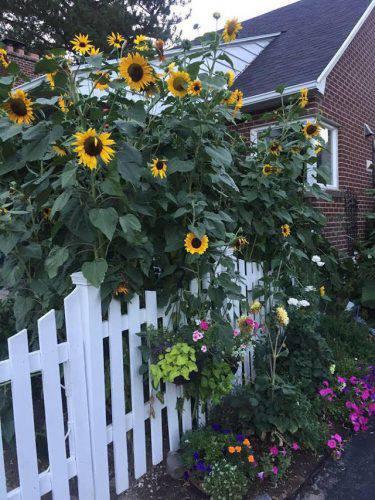 Cuộc sống vô cùng yên bình của cặp vợ chồng cùng 4 con trai bên khu vườn đầy hoa và rau - Ảnh 31.