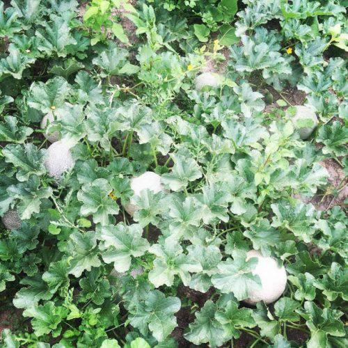 Cuộc sống vô cùng yên bình của cặp vợ chồng cùng 4 con trai bên khu vườn đầy hoa và rau - Ảnh 43.