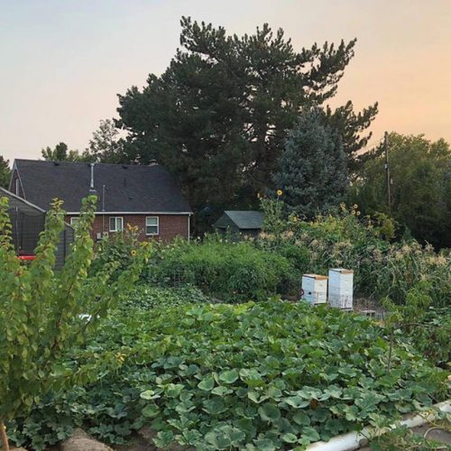 Cuộc sống vô cùng yên bình của cặp vợ chồng cùng 4 con trai bên khu vườn đầy hoa và rau - Ảnh 45.