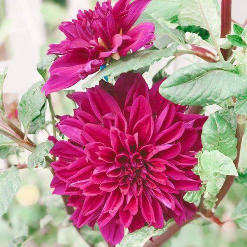Cuộc sống vô cùng yên bình của cặp vợ chồng cùng 4 con trai bên khu vườn đầy hoa và rau - Ảnh 7.