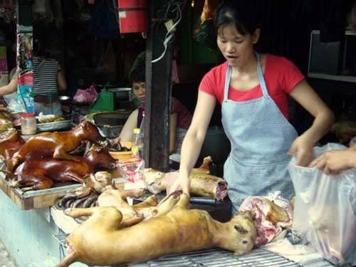Dân sinh - Bác sĩ thú y nói gì khi TP.HCM khuyến cáo không ăn thịt chó