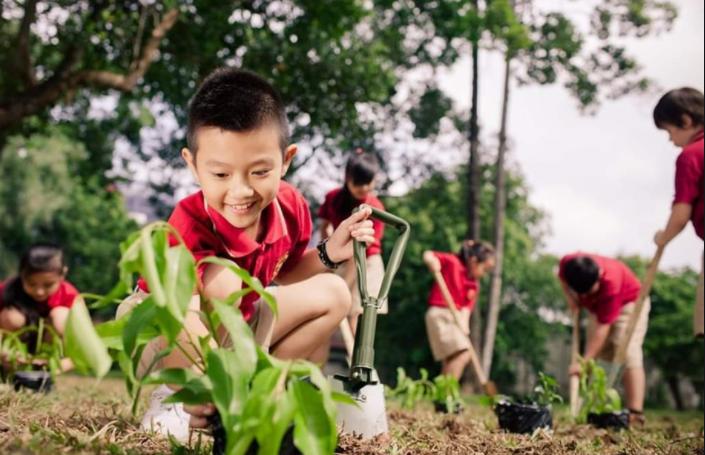 Mỗi người trồng một cây xanh là đang góp phần vào việc bảo vệ thiên nhiên, bảo vệ môi trường. Ảnh: internet.