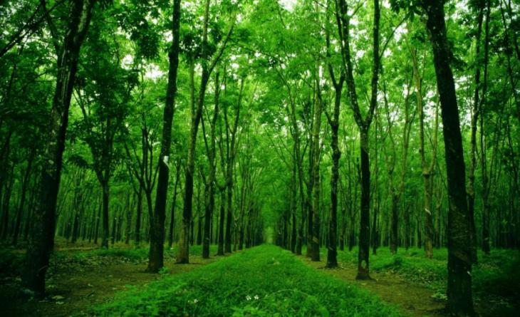 Trồng cây xanh là bạn đang gieo trồng cội phúc cho bản thân mình, góp phần bền vững cho thiên nhiên. Ảnh: internet.